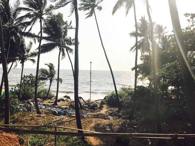 trees, curlies beach, beach, goa, goa beach